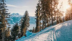 Langlaufen ist unter anderem wegen der traumhaften Kulisse ein optimaler Wintersport. Viele Health & Spa Premium Hotels bieten Langlaufloipen direkt vor der Hoteltüre - so kann der Urlaub stressfrei starten!